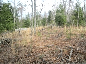Hwy. 90 - Looking for a place for a cabin?  Check out this 1.7 acre lot.