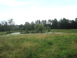Red Fox Rd., Wmsbg | 10.41 acres fenced and featuring a large farm pond.$89,900
