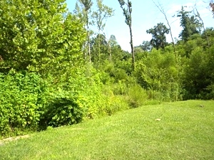 3.4177 acres on Moore Rd in Highland Park in Williamsburg | possible multiple home sites $55,000