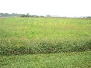 Bull Run Rd, Wmsbg; Great building lot!  2 acres +- of level land | Just off Prewitt Bend Rd. $28,500