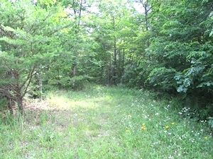 43.52 +/- wooded acres located on Oak Ridge Church Rd.  This property has a large amount of road frontage and a creek.  $59,500