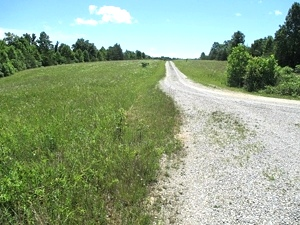 Sold!! Piney Grove, Williamsburg | Looking for a large farm or somewhere to build a subdivision?  90+/- contiguous acres $169,000