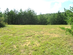 SOLD! Oak Ridge Church Rd., Williamsburg | 21 Acres+/- .