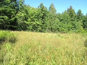 SOLD!!  Ryan's Creek, Williamsburg | 30 acres +/- located on Ryan's Creek in Whitley Co. $70,000
