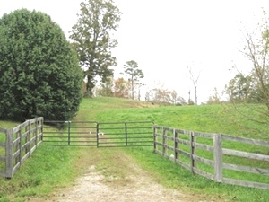 11405 Cumberland Falls Hwy |  4 awesome acres with road frontage  on Hwy 25w  $67,500