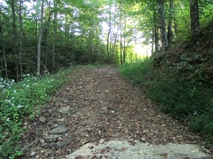Sold! Newman Campbell Rd. off of Hwy 92    200 acres +/- bordering Jellico Creek & Indian Creek
