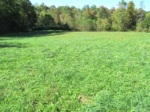 Ryan's Cemetery Rd., Wmsbg |   1 acre lot located on Ryan's Cemetery Rd.