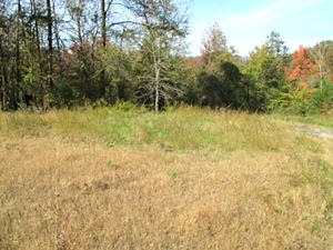 Hwy. 1804, Saxton | 5 acres +/- located on Hwy 1804 near Clearfork Baptist Church