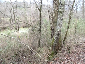 Walker Mill Dam Rd., Williamsburg, KY \ 35 acres +/- of wooded land bordering Jellico Ck.