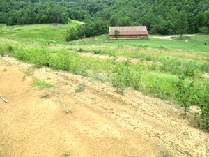 1529 E. Hwy 904, Wmsbg | 3500 sf +/- on 50 ac +/-; run cattle, ride 4-wheelers, hunt and enjoy the outdoors in the rollings hills