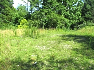 Sale Pending!  223 Shelby Hurst Rd., Wmsbg | 1.38 acres +/- containing old home site. This property is located only .2 mile off Little Cane Creek Rd.
