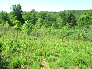 Walker Mill Road | 124 +/- acres of varying terrain with large pond and 3 gas wells.