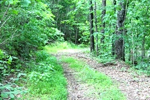 Kidd Rd./Jellico Ck., Williamsburg (Free Gas) | 112.78 surveyed acres