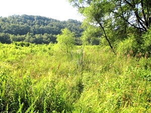 81 +/- acres on Flat Creek on the Knox-Whitley County line. Great for hunting!