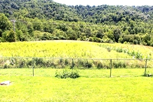 Sold! 724 Hwy 1809, Williamsburg 5 acres +/-, (according to the owner) bordering Goldens Creek