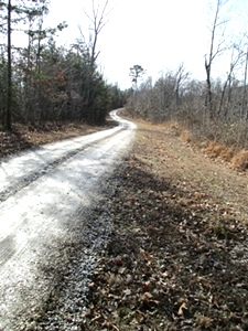 Tidal Wave Rd, Williamsburg | 47 acres +/- of undeveloped land with frontage on Tidal Wave Road.