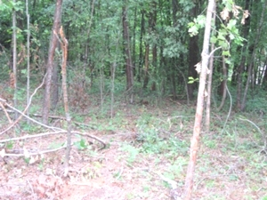 Sold! Westhaven Dr., Williamsburg | 4.7 ac. in the city limits $17,500 (sewer, water, gas available)