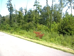 Sold!  3.4177 acres on Moore Rd in Highland Park in Williamsburg | possible multiple sites $49,000