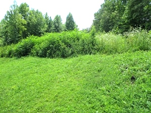 Sold! - Hwy 511 & Logan Rd., Williamsburg .79 surveyed acres located at 511 & Logan Rd. | This land is not restricted and is priced to sell. $12,500