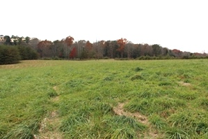 Sold! Snow White Lane | Free Gas! 11.69 acres of Windridge Farm with a pond and partly fenced. $99,000