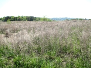 Sale Pending!!  MASON HOLLOW RD, FABER   Fabulous site for hunting, four wheeling and fishing!