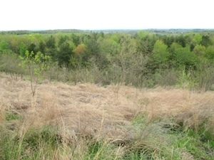 SOLD!! Tidal Wave/Corinth Rd. | Hunters Paradise! Attention deer and turkey hunters! 110 acres of surveyed property