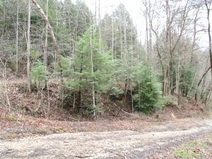SOLD Walker Mill Dam Rd., Williamsburg, KY \ 35 acres +/- of wooded land bordering Jellico Ck.