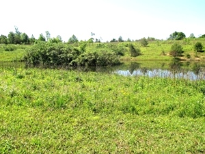 SOLD Walker Mill Road | 124 +/- acres of varying terrain with large pond and 3 gas wells.