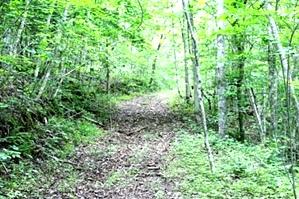 SOLD Kidd Rd./Jellico Ck., Williamsburg (Free Gas)   112.78 surveyed acres
