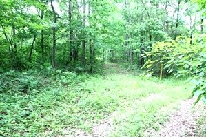 SOLD Kidd Rd./Jellico Ck., Williamsburg (Free Gas) | 112.78 surveyed acres