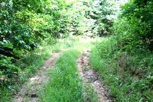 SOLD Kidd Rd./Jellico Ck., Williamsburg (Free Gas) | 112.78 surveyed acres