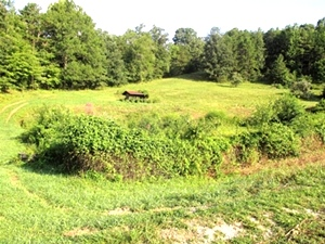 Sold! 1026 Brown's Ck. Rd., Wmsbg  | 40 acres w/a nice house site, well and septic already on site.