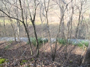 Sold! 1111 Jr. Rowland Rd | 45 Acres +/- located close to exit 15 at Goldbug and both Williamsburg and Corbin.
