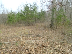23rd Street, Corbin 17.64 acres of vacant land that is strategically located just off the Corbin By Pass (Hwy 3041).