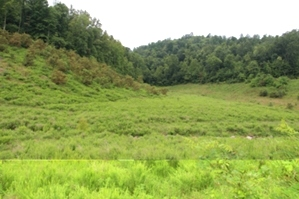Rapier Hollow, Knox Co. | 183.72 surveyed acres in Knox Co..with great potential as a hunting and recreation property