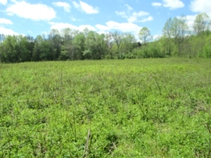 2200 Croley Bend Rd, Wmsbg |  Six vacant lots for sale located at 2200 Croley Bend Rd.
